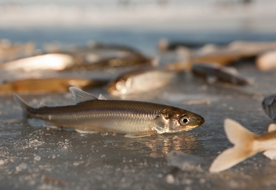 Охота рыбалка техника отдых и